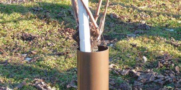 Pflanzenschutz zylindrisch braun